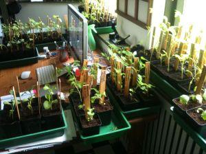 Een oerwoud help prilgroen - Water kamer model ...